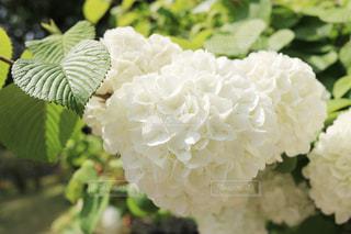 近くの花のアップの写真・画像素材[1136760]
