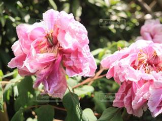 近くの花のアップの写真・画像素材[1138402]