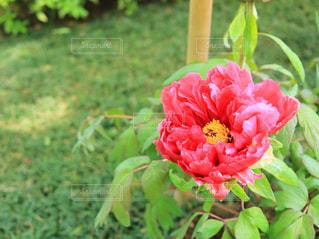 植物にピンクの花の写真・画像素材[1138403]