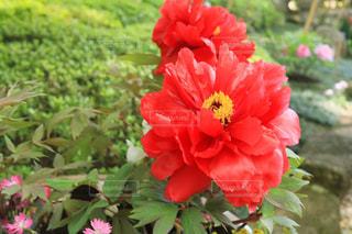 近くの花のアップの写真・画像素材[1138406]