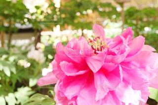 近くの花のアップの写真・画像素材[1138437]
