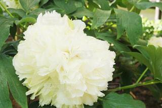 近くの花のアップの写真・画像素材[1138439]