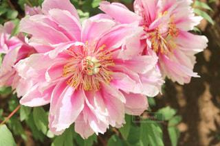 近くの花のアップの写真・画像素材[1138442]