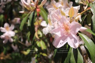 近くの花のアップの写真・画像素材[1138444]