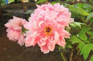 近くの花のアップの写真・画像素材[1138445]