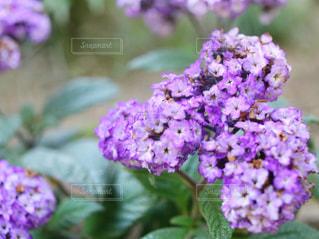 近くの花のアップの写真・画像素材[1138456]
