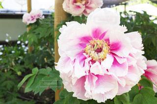 近くの花のアップの写真・画像素材[1138464]