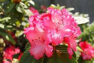 近くの花のアップの写真・画像素材[1138467]