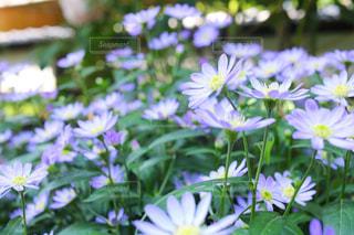 近くの花のアップの写真・画像素材[1138468]