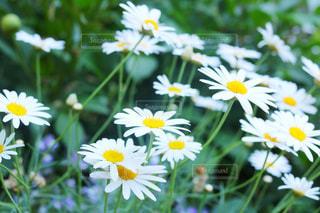 黄色の花の写真・画像素材[1138469]