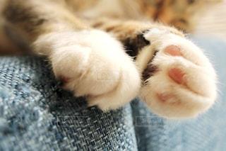 近くに眠っている猫のアップの写真・画像素材[1145099]