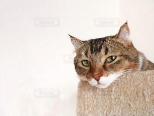 カメラを見ている猫の写真・画像素材[1151119]