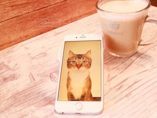 コーヒー カップの横に座っている猫の写真・画像素材[1159812]