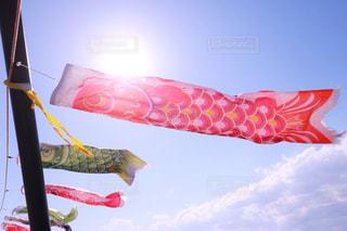 凧の飛行人の写真・画像素材[1164386]
