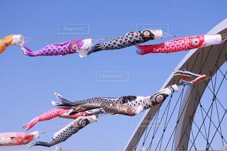 青空と鯉のぼりの写真・画像素材[1164387]