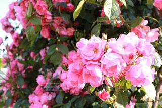 近くの花のアップの写真・画像素材[1182189]
