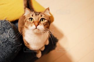 カメラを見ている猫の写真・画像素材[1182687]
