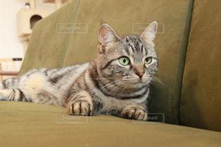 ソファで横になっている猫の写真・画像素材[1189103]