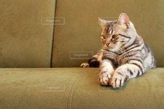 ソファで横になっている猫の写真・画像素材[1189104]