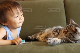 猫を持って少年の写真・画像素材[1189109]