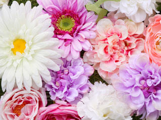 お花たちの写真・画像素材[1196992]