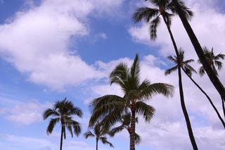 ヤシの木とビーチの写真・画像素材[1233986]
