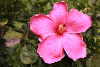 近くの花のアップの写真・画像素材[1234310]