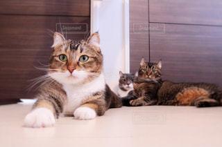 白い面の上に横たわる猫の写真・画像素材[1283420]
