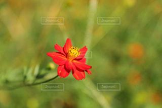 近くの花のアップの写真・画像素材[1410768]