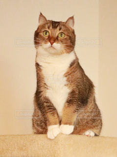 白い背景の上に座っている猫の写真・画像素材[1426050]