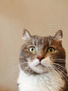 猫の写真・画像素材[1433866]