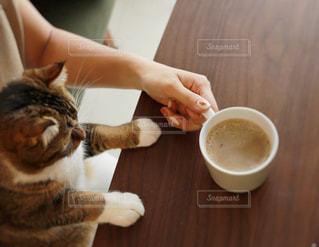 チャバとコーヒーと嘘と胃袋の写真・画像素材[1455199]