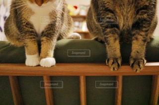 木製テーブルの上に座っている猫の写真・画像素材[1464556]