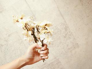花を持っている手の写真・画像素材[1520732]