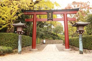公共の庭園のベンチの写真・画像素材[1596546]