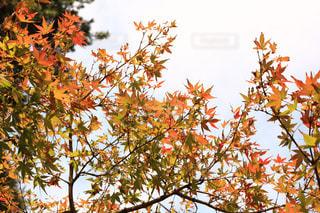 近くの木のアップの写真・画像素材[1596555]