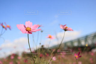 近くの花のアップの写真・画像素材[1609994]