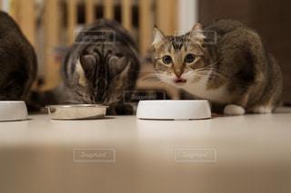 カウンターに座っている猫の写真・画像素材[1761708]