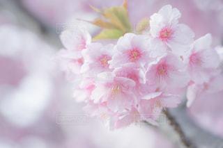 近くの花のアップの写真・画像素材[1827356]