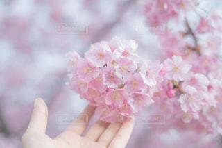 花を持っている手の写真・画像素材[1827357]