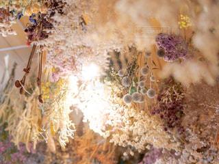 近くの花のアップの写真・画像素材[1856079]