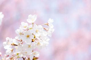 近くの花のアップの写真・画像素材[1873563]