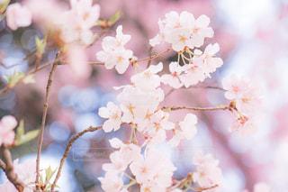近くの花のアップの写真・画像素材[1873564]