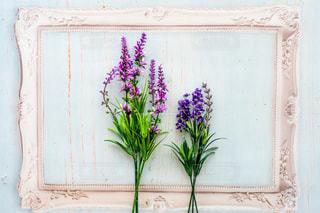 花の写真・画像素材[2054253]