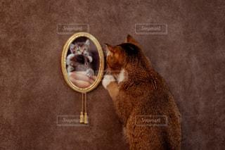 カメラのポーズをとる鏡の前に座っている猫の写真・画像素材[2231644]