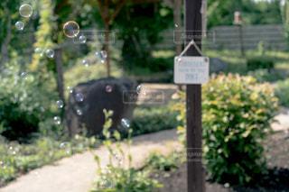 庭の写真・画像素材[2243676]