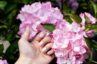 花の写真・画像素材[2243684]