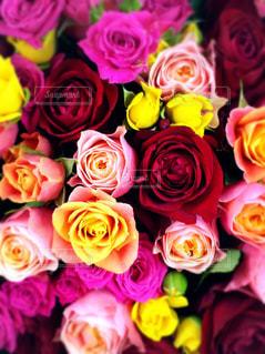 色とりどりのバラの花束の写真・画像素材[746707]