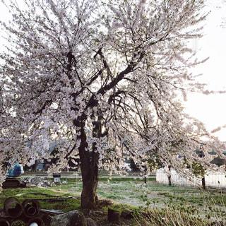 風景 - No.516715