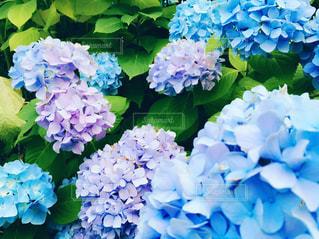 花の写真・画像素材[548446]
